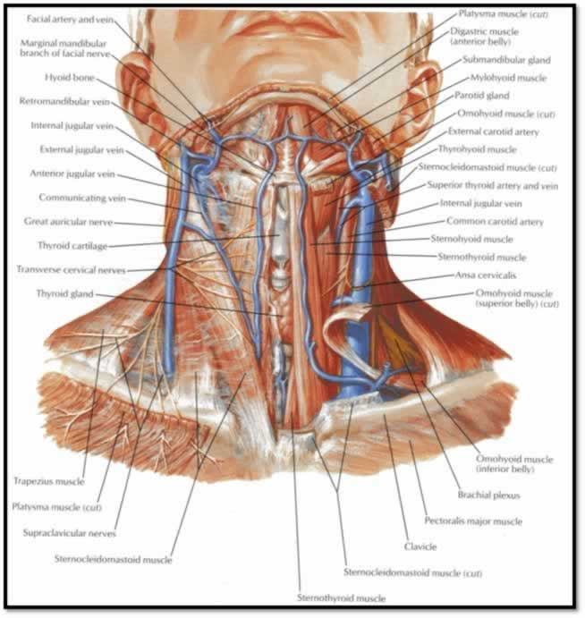 ProcGuide: Internal Jugular Central Line